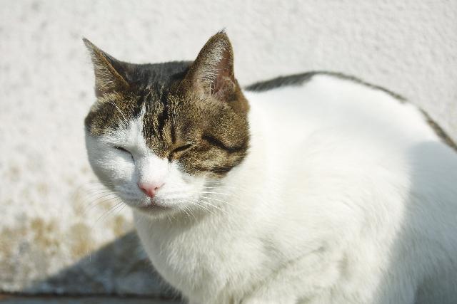 寒いと猫背になりがちだが自律神経にも影響が
